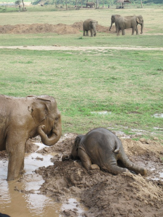 funny-elephant