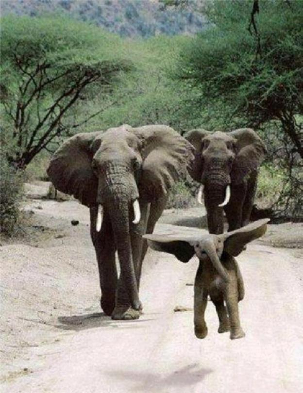 joyful_elephant